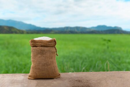 Jasmine Rice in burlap sack on wooden table with the rice field background