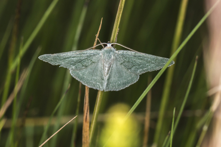 A grass emerald is sitting on a grass-stock Stock Photo