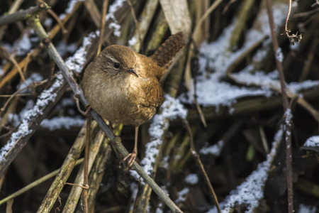 A wren in the shelf on the riverside Stock Photo - 81431126
