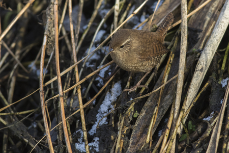 bough: A wren in the shelf on the riverside