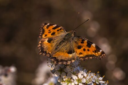 A large tortoiseshell is sitting on a grassstock