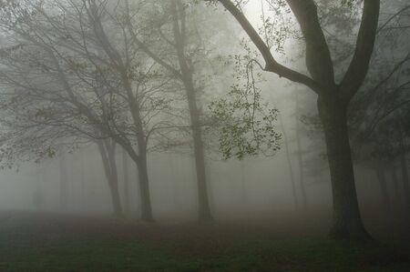 Spring Freezing Fog