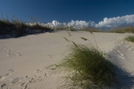 outer banks: Outer Banks Dune Grass