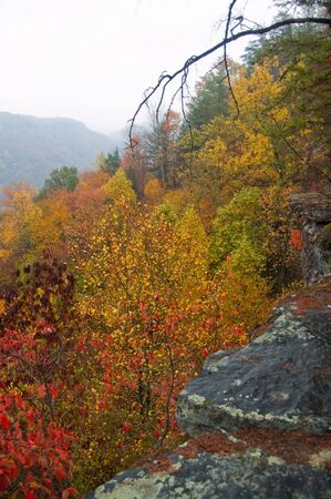 west virginia trees: Overcast Color