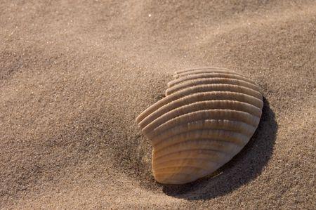 Sandy Sea Shell