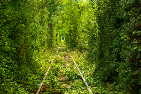 Green tunnel thru wild vegetation with train raily Stock Photo