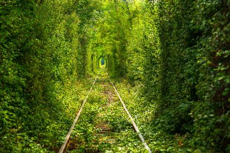 Groene tunnel thru wilde vegetatie met trein Raily Stockfoto - 43636428