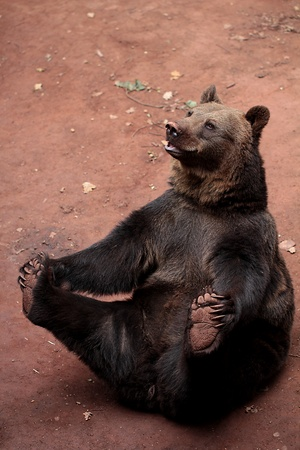 Bear in ZOO photo