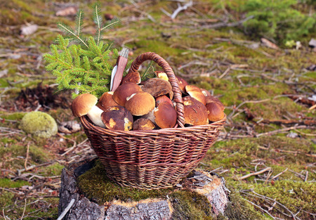 Bolete in moss in forest photo