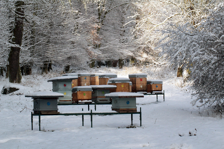 praiseworthy: Bee hives in snow winter Stock Photo