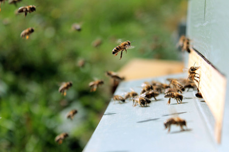 Bees on honeycomb in the hive 写真素材