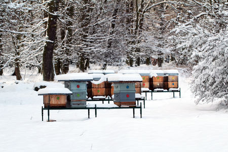 Bee hives in snow winter Stock Photo