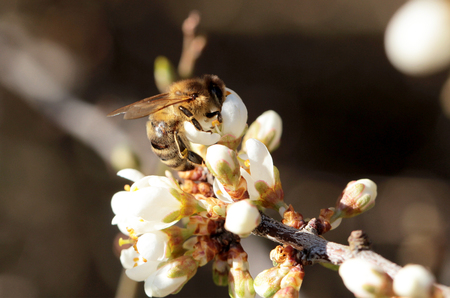 studious: Bees at work at flower