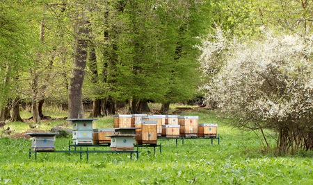 Bee hives in spring