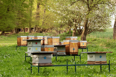 Bee hives in pretty spring