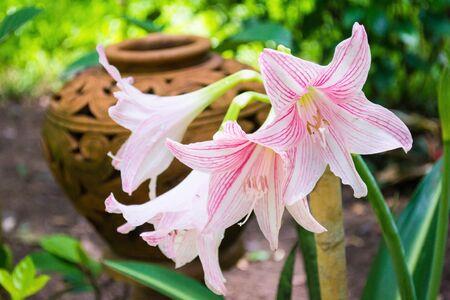 Flower Stock Photo - 16243599