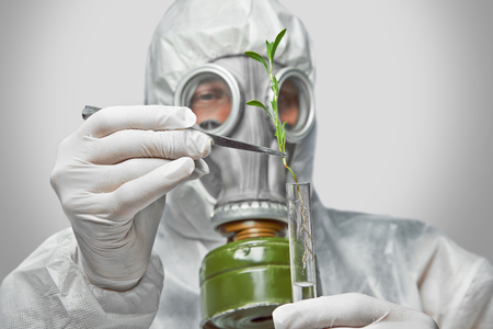 Scientist in protective uniform and respirator puts green plant in flask with tweezers photo