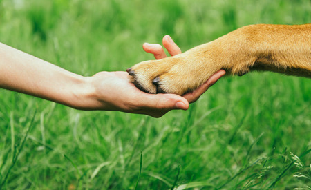 Dog paw and human hand are doing handshake on nature, friendship Фото со стока