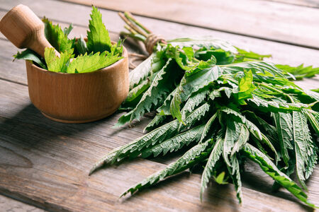 nettle: Green nettle in mortar with pestle on wooden background, medicinal herb Stock Photo