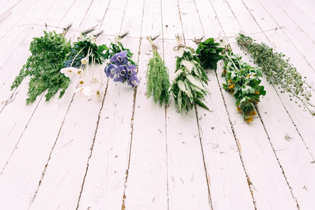 dried herbs: Medicinal green herbs are dried on rope, bottom view
