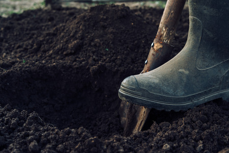 Unrecognizable man digs a hole by shovel in garden Standard-Bild