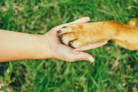 Dog paw and human hand are doing handshake on nature photo