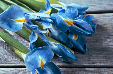 purple irises: Bouquet of blue flowers Irises on a wooden background