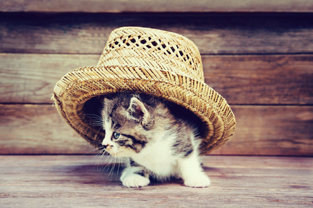 Little kitten under the hat on wooden background. Image with retro vintage instagram filter