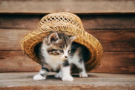 Curiosity little kitten under the hat on wooden background photo