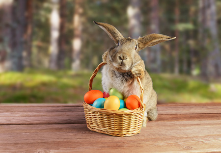 woods: Easter rabbit sits with basket of colored eggs on spring nature