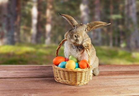 Ostern Kaninchen sitzt mit Korb der farbigen Eier auf Frühling Natur