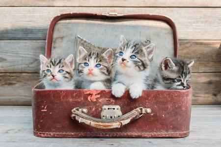 Kittens in retro suitcase on a wooden background Standard-Bild