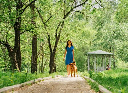 mujer con perro: Mujer hermosa joven que recorre con el perro labrador retriever en el parque de verano Foto de archivo