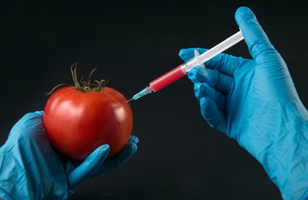 injected: Scientist injected red liquid in the syringe into tomato Stock Photo