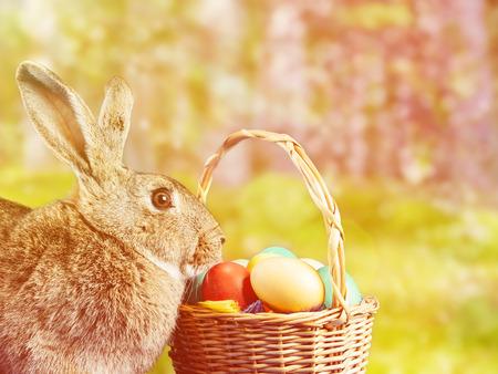 arbol de pascua: hermoso conejo Pascua sitsnear una cesta con huevos de colores en el parque. Imagen con luz del sol efecto