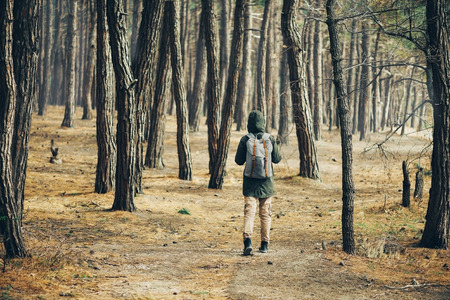 girl in the forest: Hiker young woman with backpack walking in a pine forest, rear view