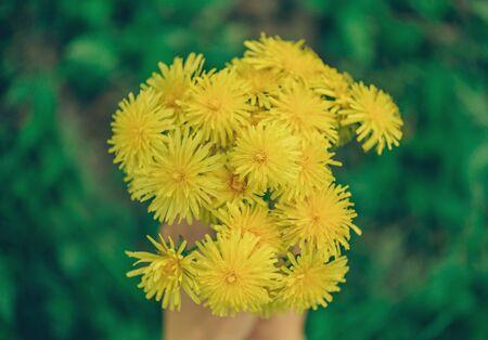 bouquet fleur: Hands with bouquet of yellow dandelions, top view, close-up.  Banque d'images