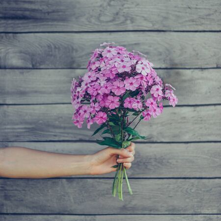 hands giving: Bouquet of phlox flowers in female hand on wooden background Stock Photo