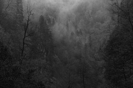 black magic: Beautiful mystical landscape. Mist among woods in the forest. Monochrome image. Effect film grain