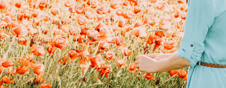 Unrecognizable woman picking red poppies flowers in meadow, view of hands.