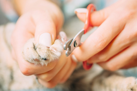 Woman holding cat paw and cutting nails, close-up.