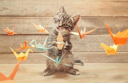 Curiosity little kitten playing with colorful paper origami birds cranes and looking at camera on wooden background
