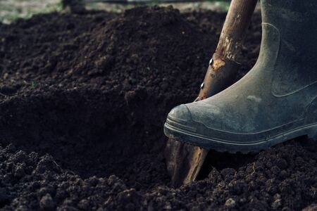 Unrecognizable man digs a hole by shovel in garden Stockfoto