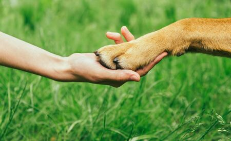Dog paw and human hand are doing handshake on nature, friendship Archivio Fotografico - 128333530