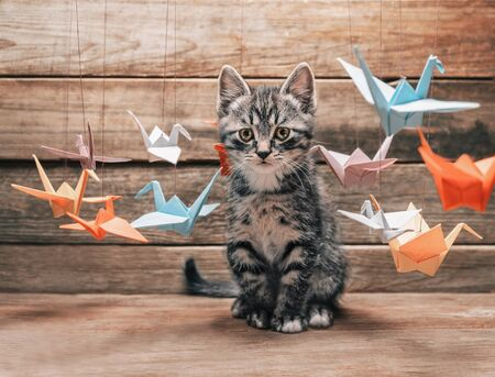 Cute little kitten sitting among colorful paper origami bird cranes and staring at camera
