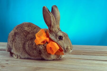 Cute rabbit with a bow sits on a wooden table