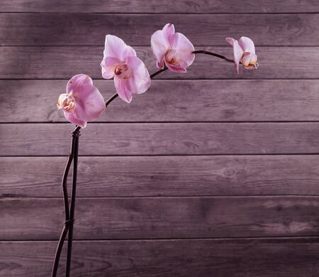 Pink orchid on a wooden background, space for text