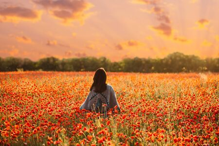 Rear view of unrecognizable woman wearing in poncho walking in red poppy flowers meadow at sunset. Stok Fotoğraf