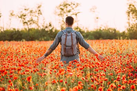 Traveler young man with backpack walking in red poppies meadow, rear view.