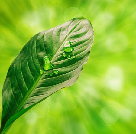 Step shape of water drops on green leaf, on the background of leaves and sun rays Stock Photo
